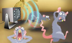 Ультразвуковой отпугиватель мышей и крыс – реально работает или нет? Ставим точку в вопросе