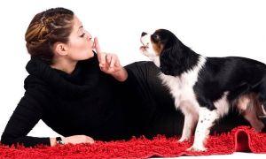 Ошейник антилай – превращаем пустобреха в приличную собаку