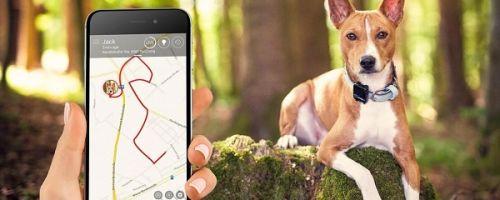GPS трекер для собак и кошек – принцип работы, правила выбора и использования