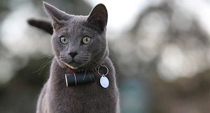 трекер для кошек